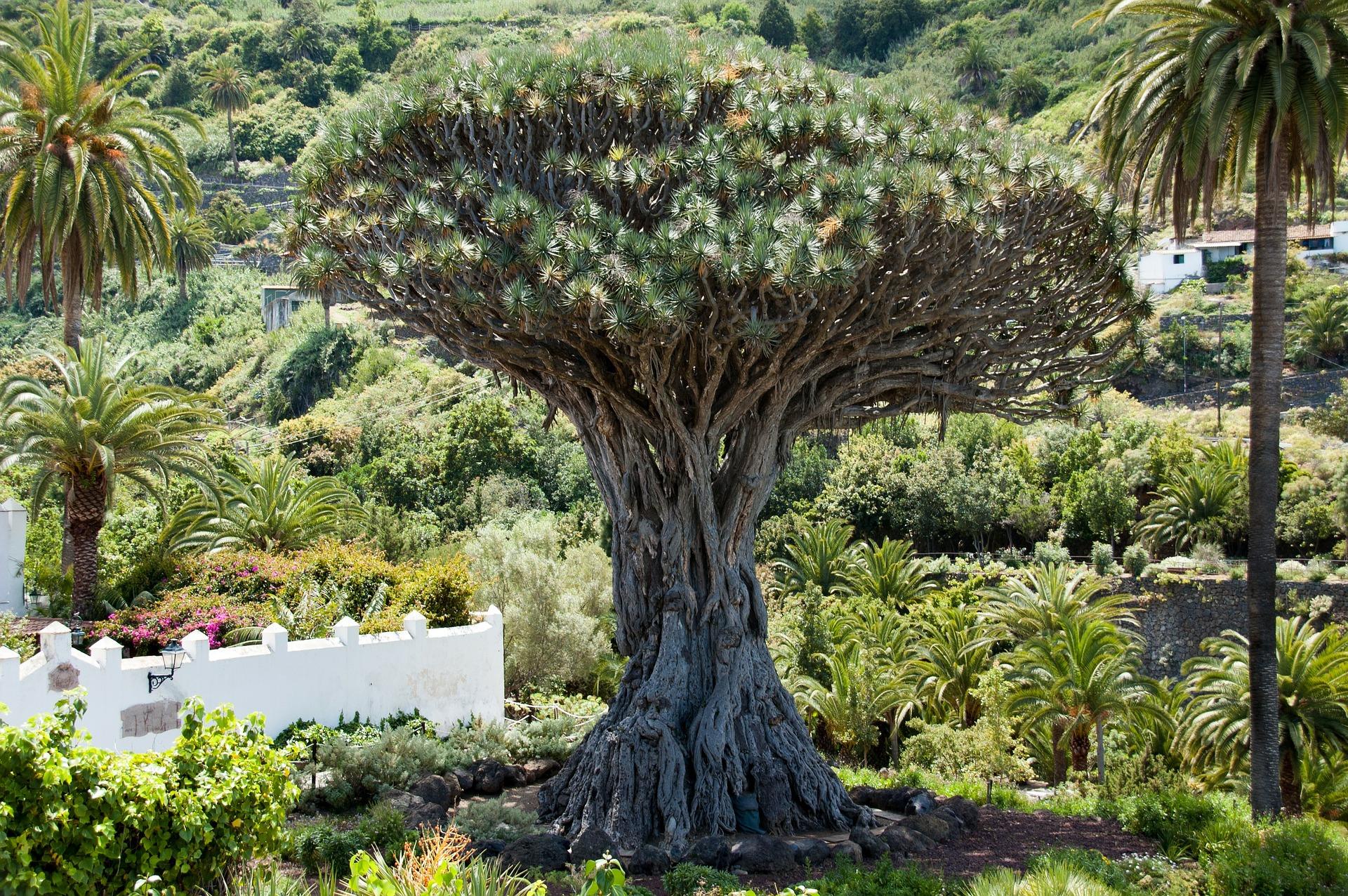 Vulcanus atlanti birodalma-Tenerife körutazás ***/****